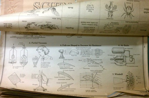 vintage educational school wall science charts